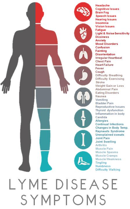 LymeSymptoms.png